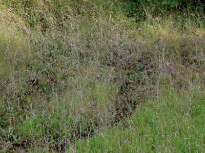 初秋の溜池跡湿地