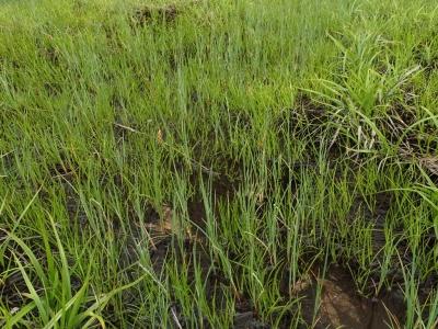 第2調査地・湿地