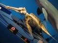 アマゾンカワイルカの骨格