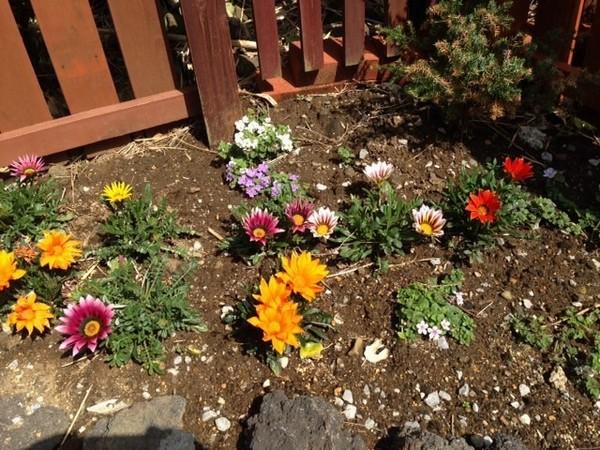 シーグラス庭のお花