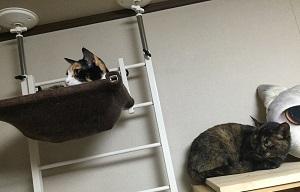 ランとミケ子