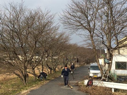 20150215_sakura_004.jpg