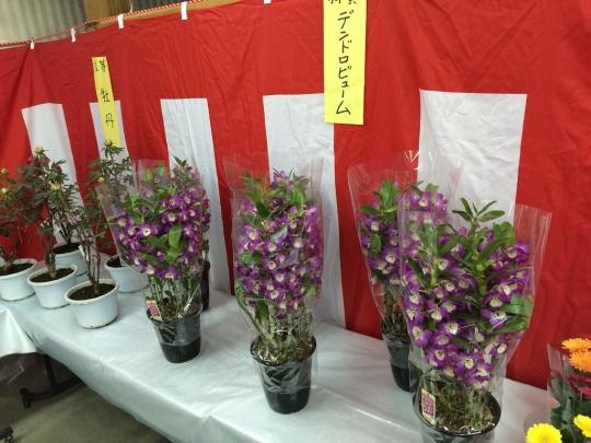 hananokuji20150402_004.jpg