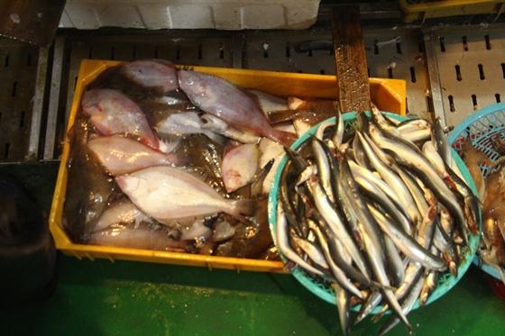 150111fish (13)
