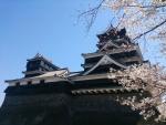熊本城さくら2 2015
