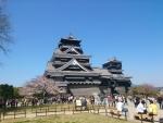 熊本城さくら3 2015