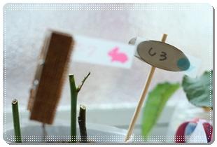 小さな看板!100均セリア「アレンジメントウッドピック」を使用して薔薇のさし芽を育ててみる