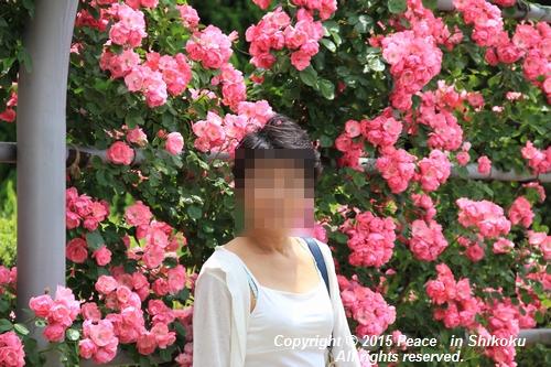awajihanamidori-0518-3000.jpg