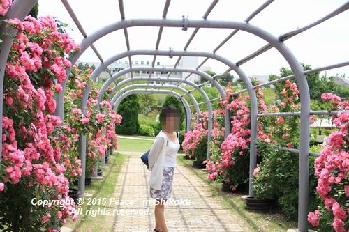 awajihanamidori-0518-3004.jpg