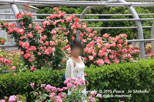 awajihanamidori-0518-3010.jpg