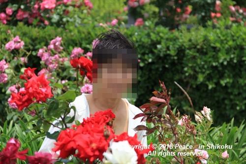 awajihanamidori-0518-3014.jpg