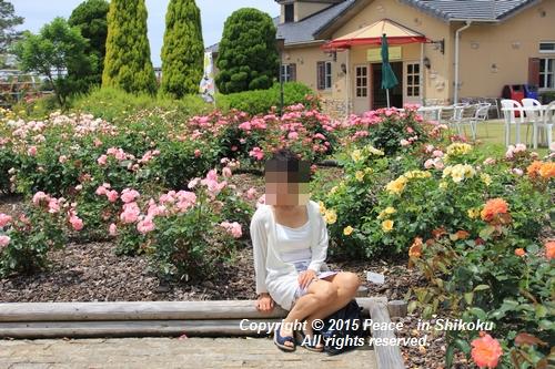 awajihanamidori-0518-3028.jpg