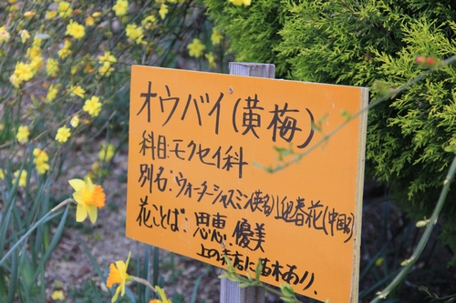 ijawa-0323-0421.jpg