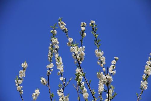 ijawa-0323-0478.jpg