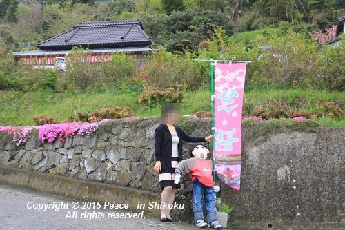 sibasakura-0420-1511.jpg