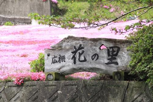sibasakura-0420-1645.jpg
