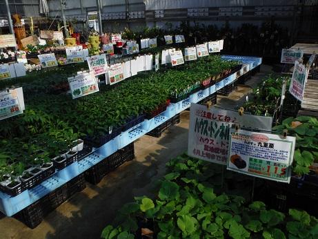 20150328野菜