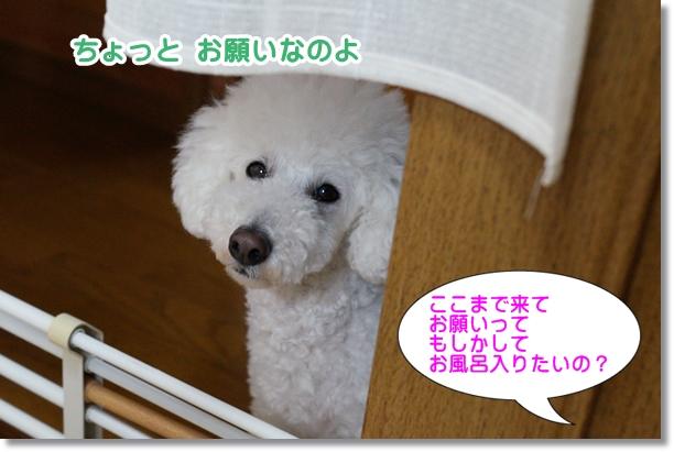 お風呂希望2