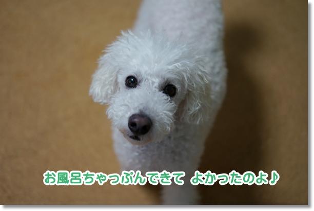 お風呂希望4