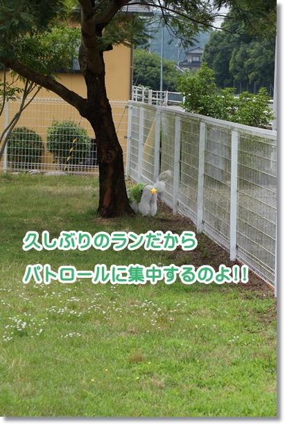 雨降りがお休み3