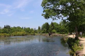 150524妙高高原いもり池(2)
