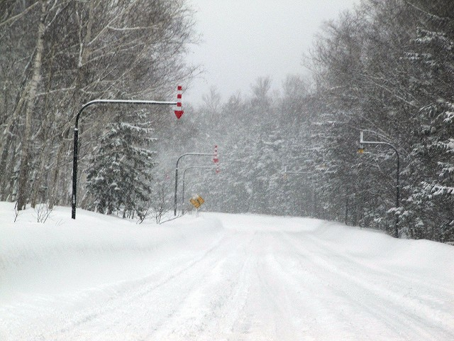 s-白樺街道、、、