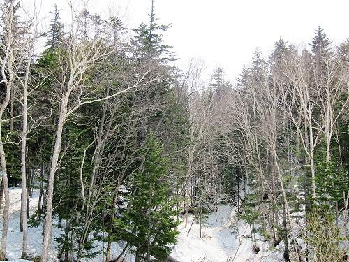 s-山林中には 雪あり。
