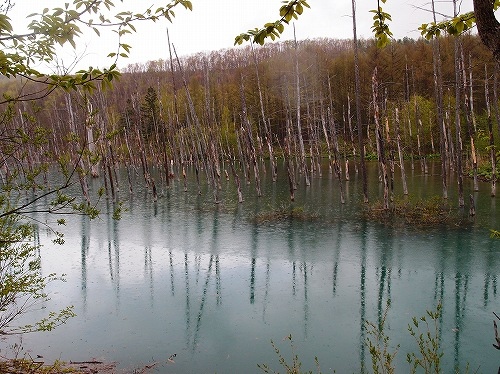 s-雨の中の青い池