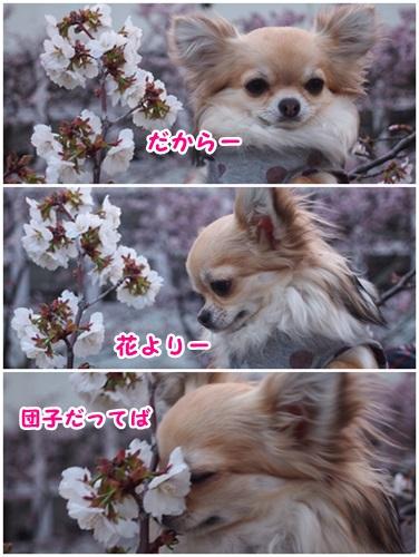 桜とさぁーちゃん