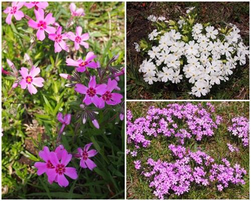 公園の可愛いお花