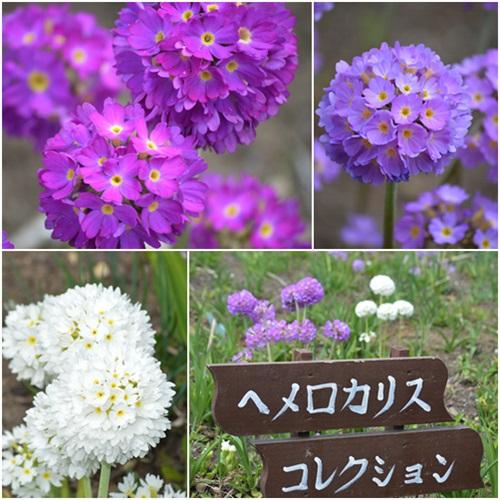 ヘメロカリス花壇