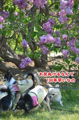 DSC_0049_20150531110357bd2.jpg