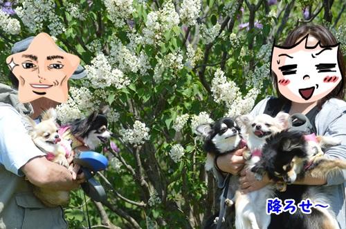 DSC_0058_20150531111006da4.jpg