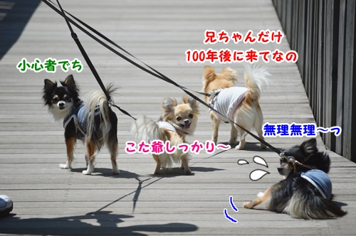 DSC_0064_20150530013630966.jpg