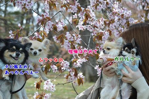 DSC_0976.jpg