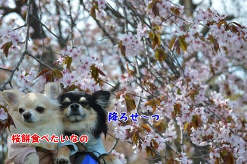 DSC_0985.jpg
