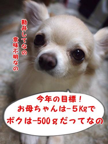 P1010733.jpg