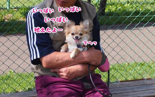 P5051878.jpg