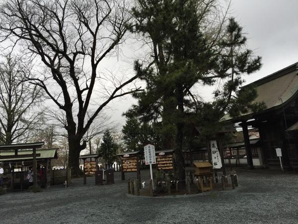 阿蘇神社 出逢いの松
