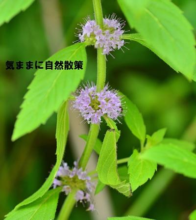 20150811ウトナイ湖 (2)