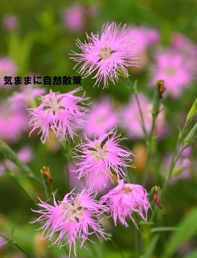 20150811ウトナイ湖 (4)