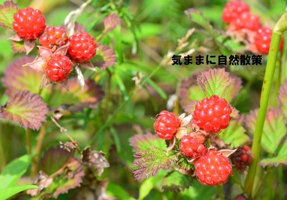 20150811ウトナイ湖 (8)