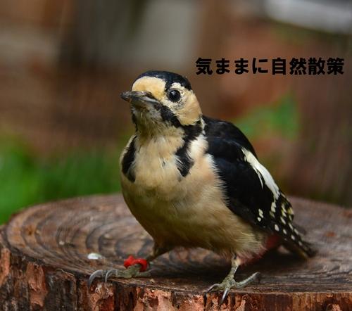 150813帯広動物園 (1)