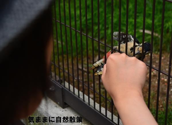 150813帯広動物園 (2)