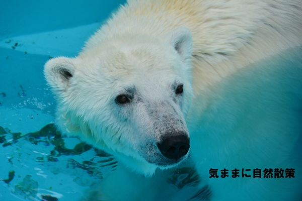 150813帯広動物園 (4)