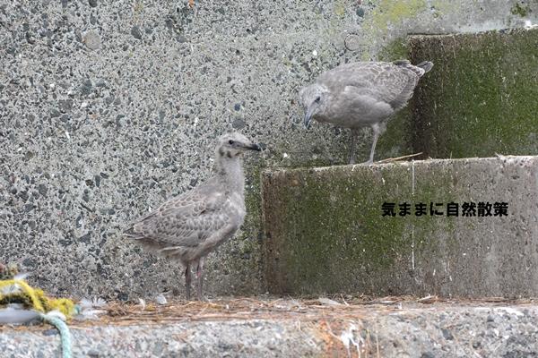 20150815落石クルーズ (5)