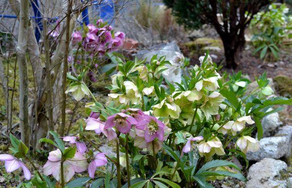 3,29クリロー花壇