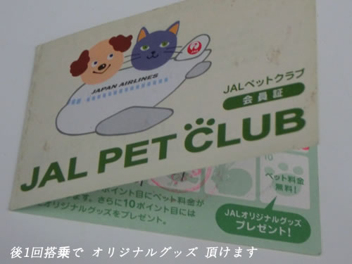 JAL ペット空輸 猫