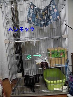 CIMG0139.jpg
