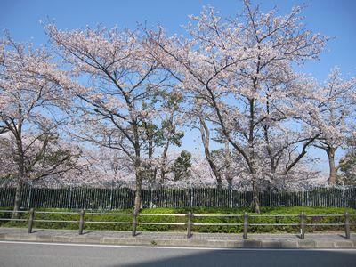 IMG_0134阪神競馬場